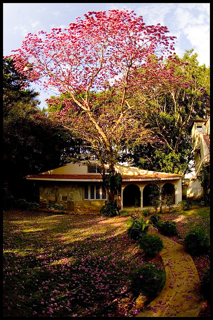 The Hitiki House in Bangalore